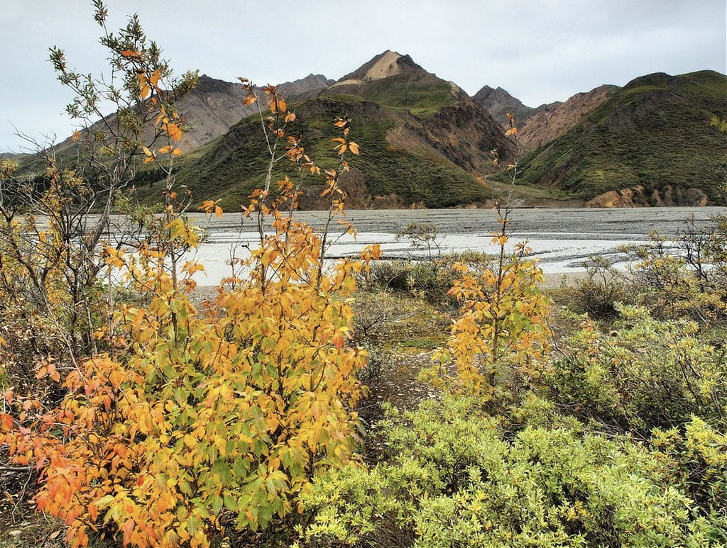 Autumn at Denali National Park
