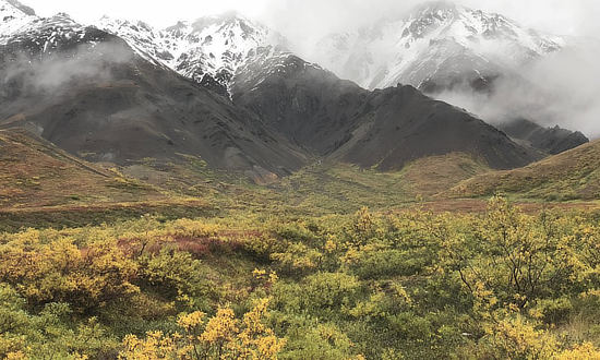 Expect wide variations in weather and temperature at Denali