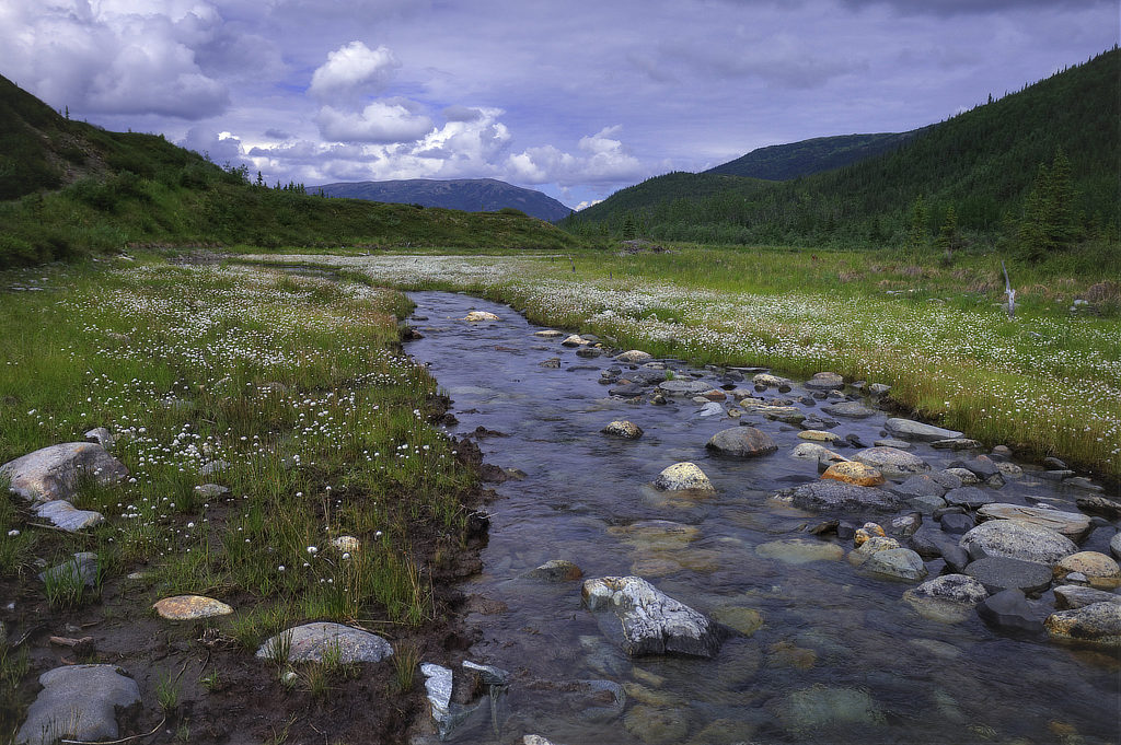 Moose Creek in the spring at Denali National Park