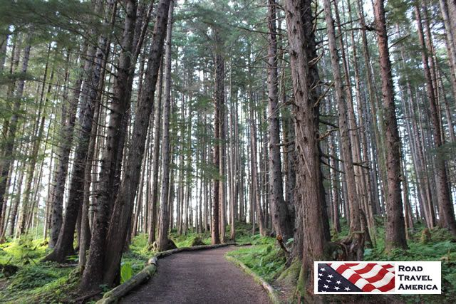 The deep quiet of the Alaskan rainforest at Hoonah