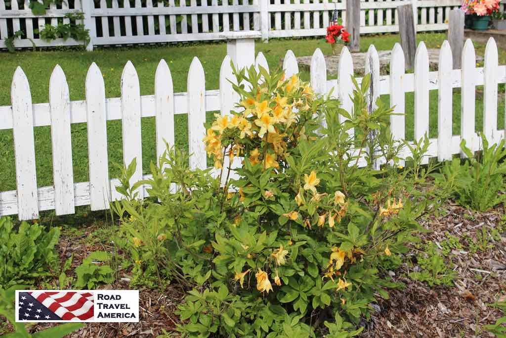 White picket fence with spring flowers in Hoonah, Alaska