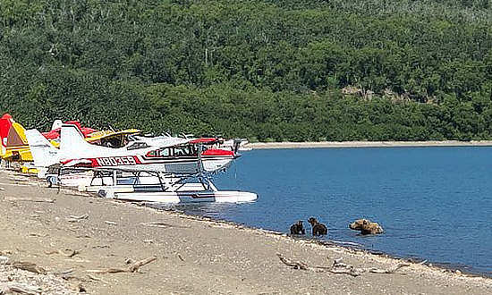 A common sight in in Katmai National Park - float planes and brown bears