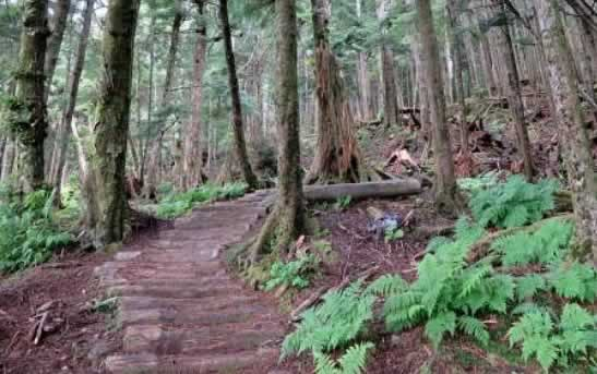 Hiking in the Hoonah wilderness