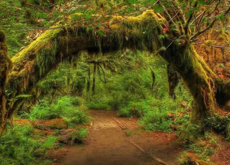 Extreme vegetation inside the rain forest at Olympic National Park